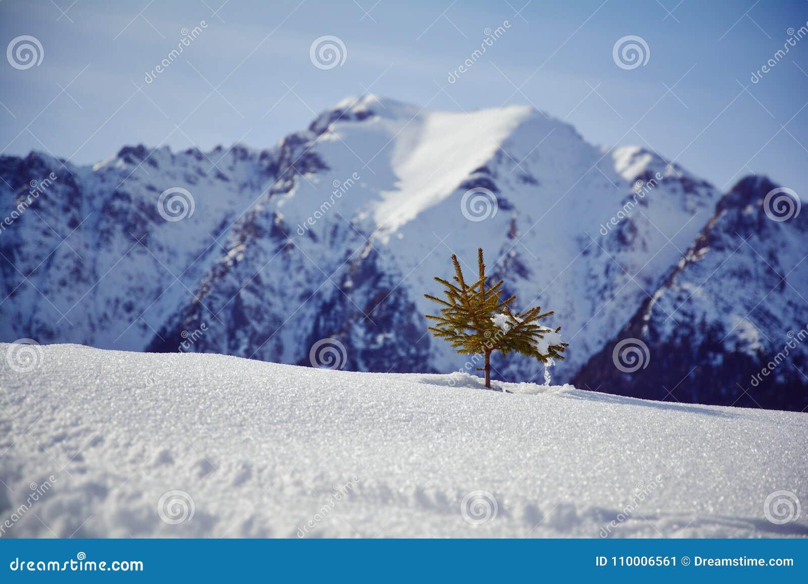 Poco albero nella neve