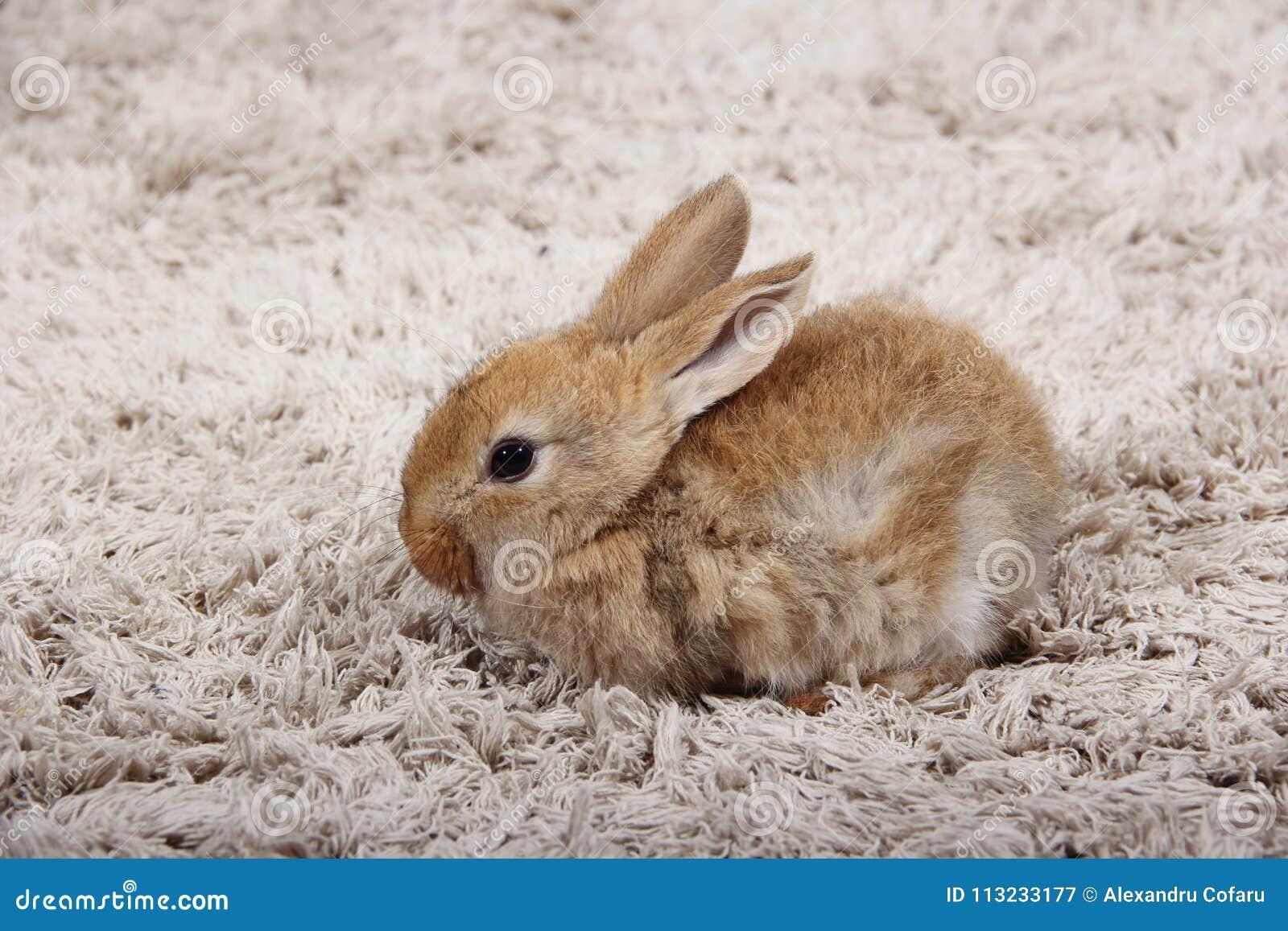 Poco Coniglio Di Coniglietto Nella Casa