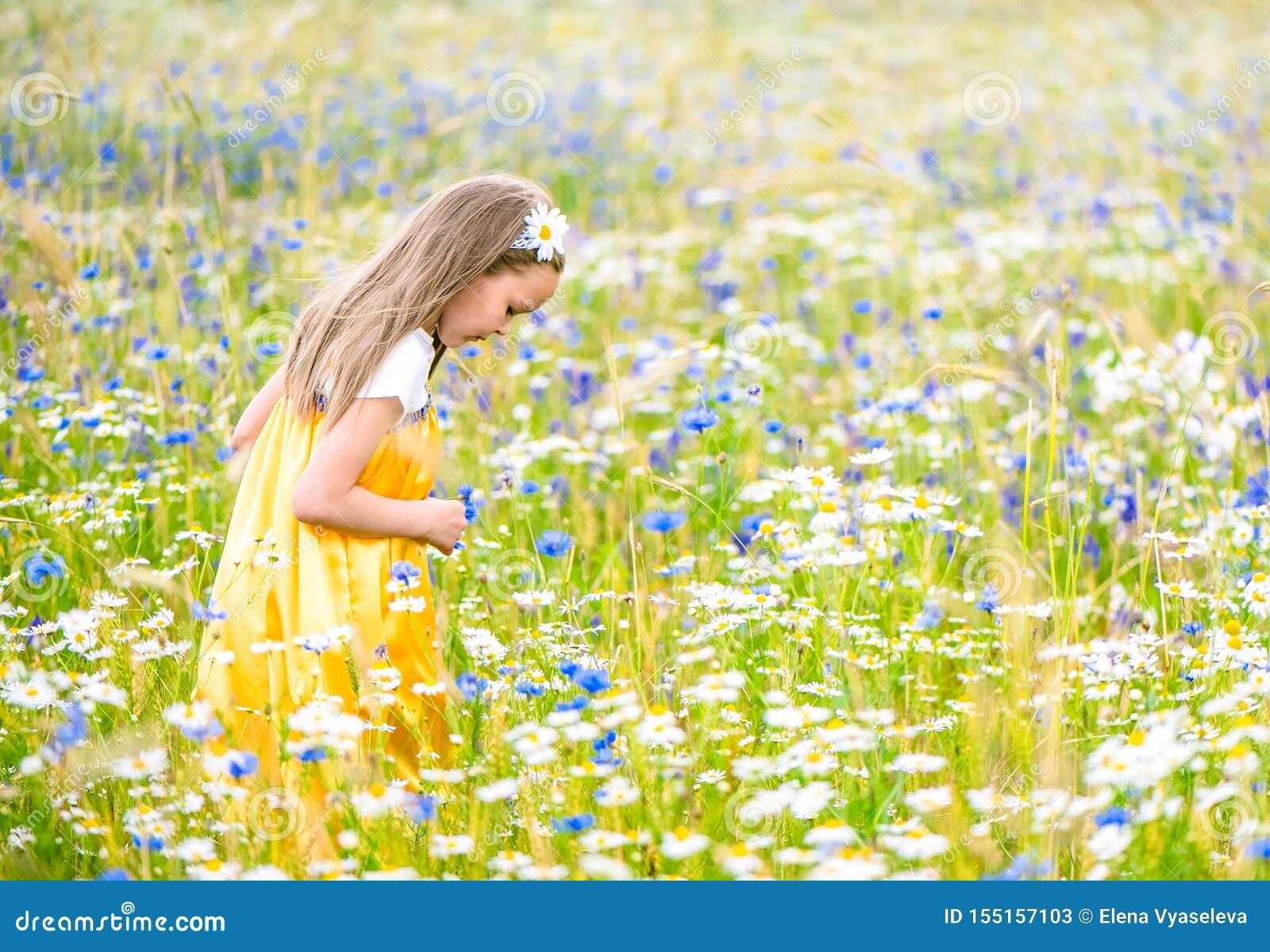 Poco muchacha bonita en el vestido ruso amarillo que escoge las flores en el campo de flores salvajes el día de verano