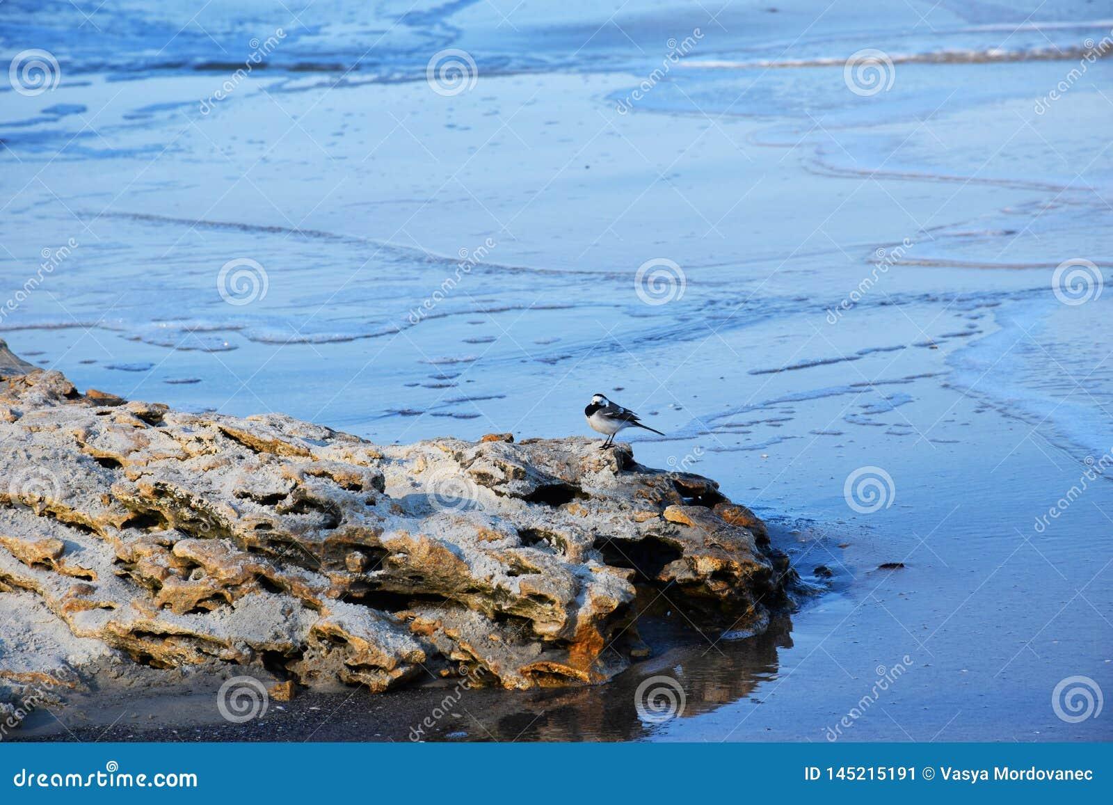 Poco p?jaro en una piedra por el mar