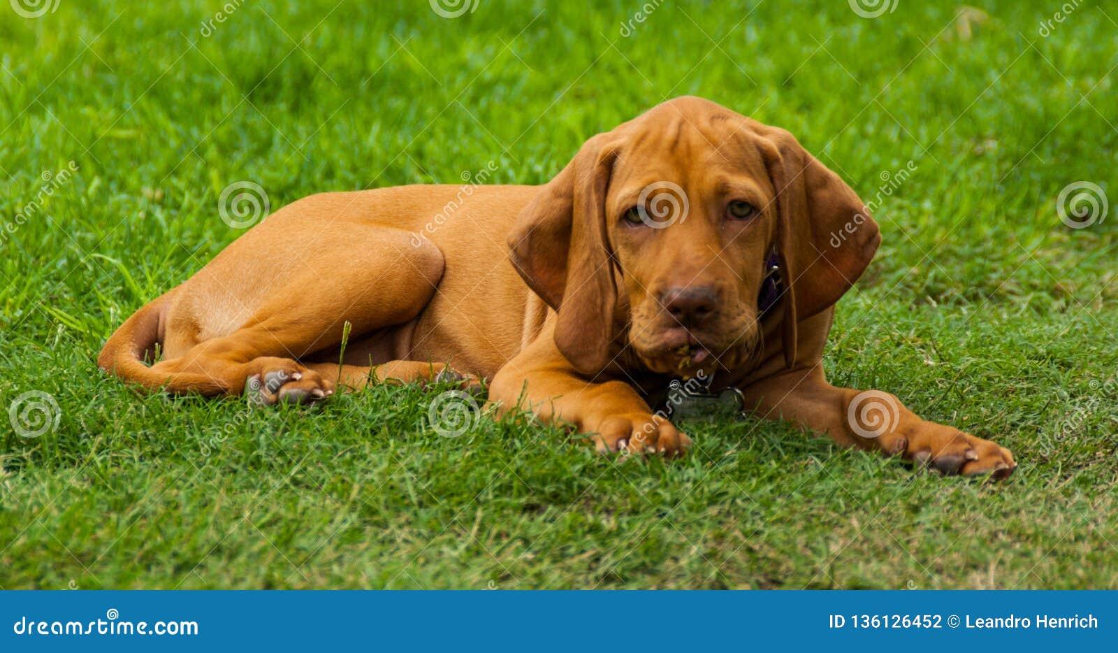 Poco perro que mira a mí del patio trasero