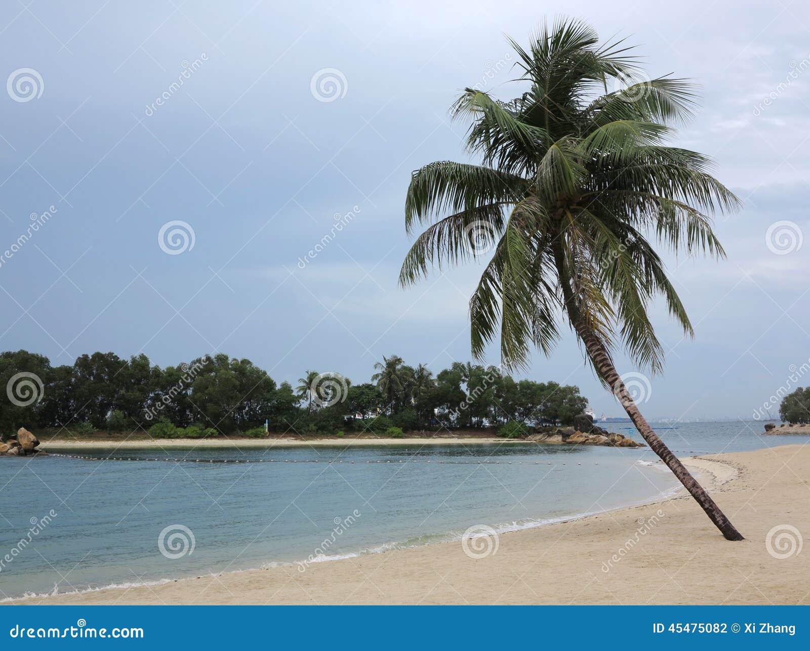Poconut棕榈