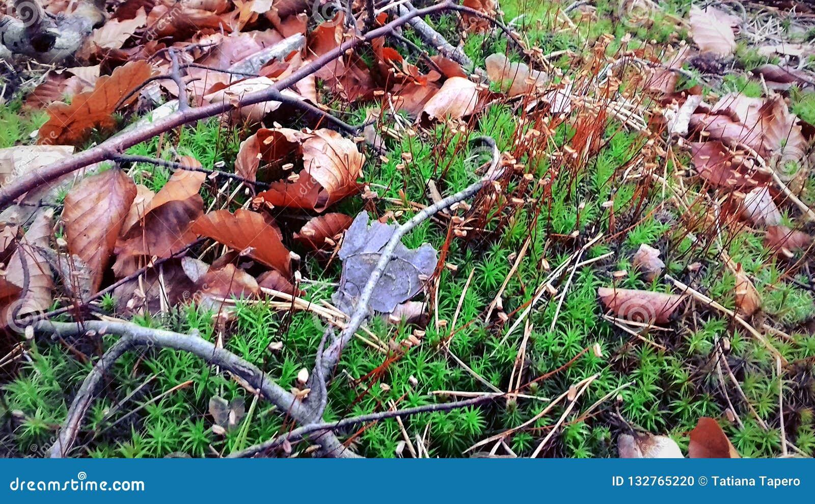 Początek jesień Liście już spadali Zielona trawa