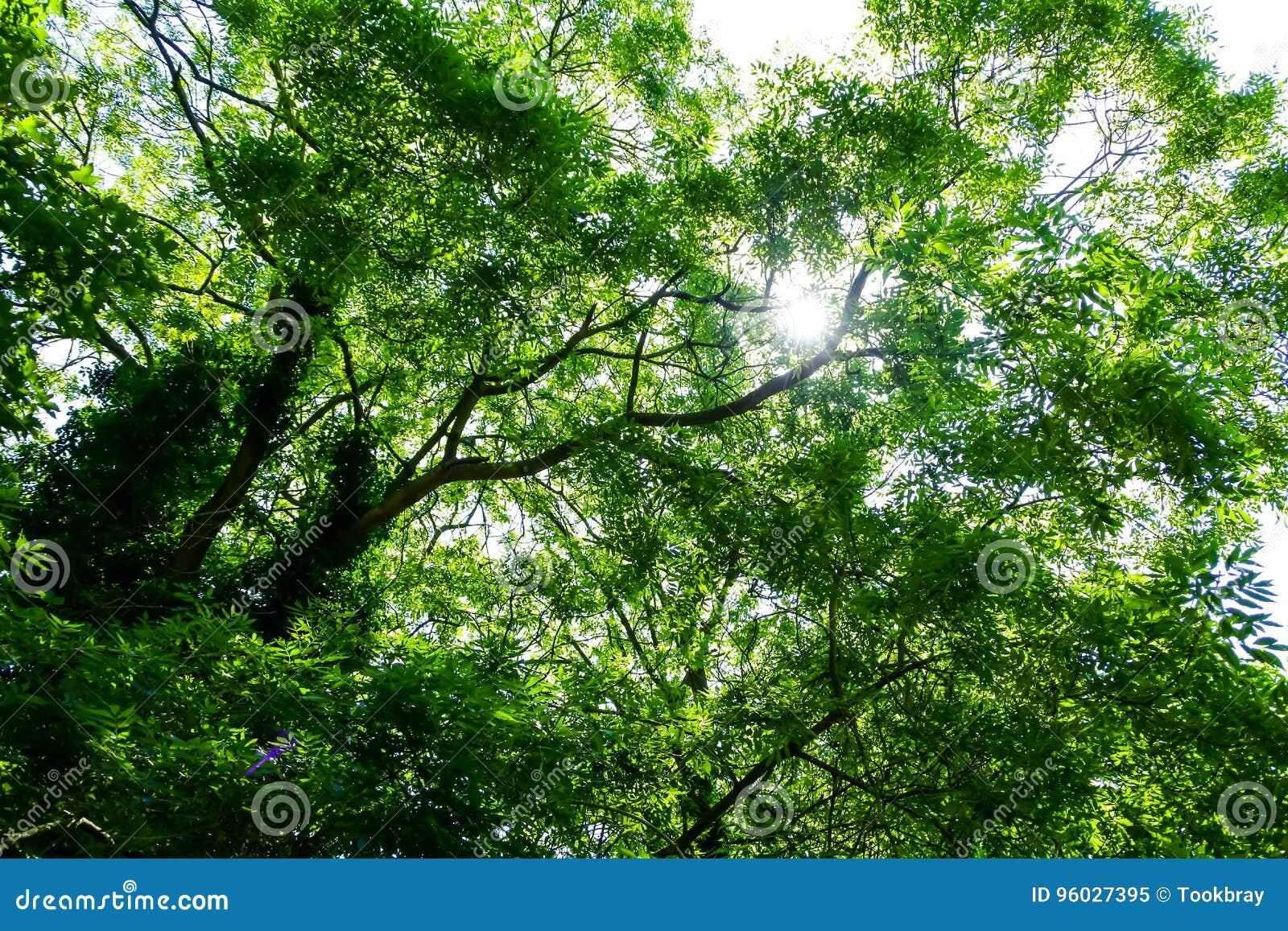 Pod drzewnym cieniem