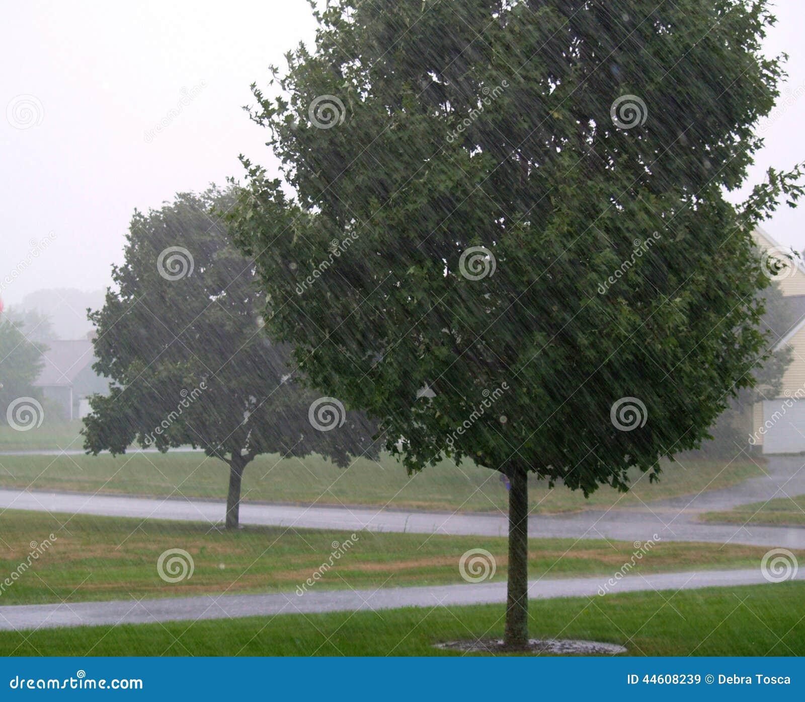 Podeszczowi drzewa