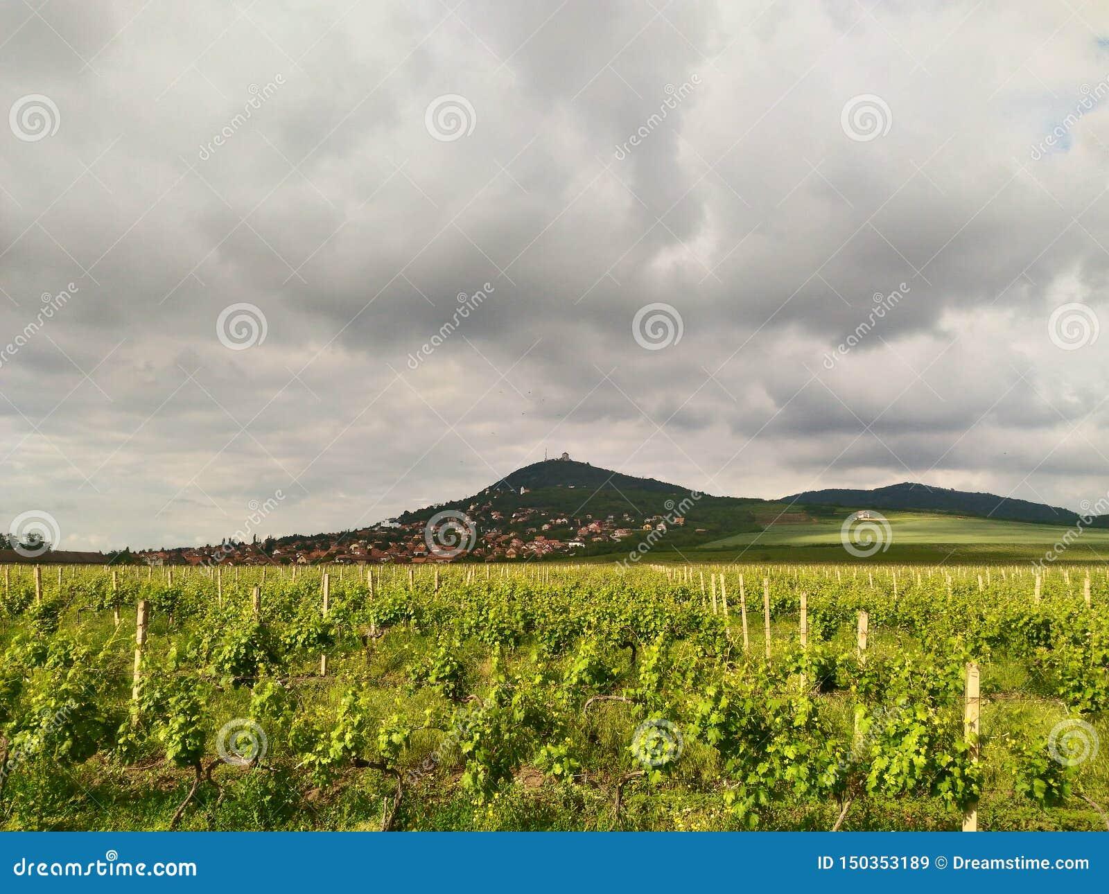 Podnozje Vrsackih planina, Vrsacka kula