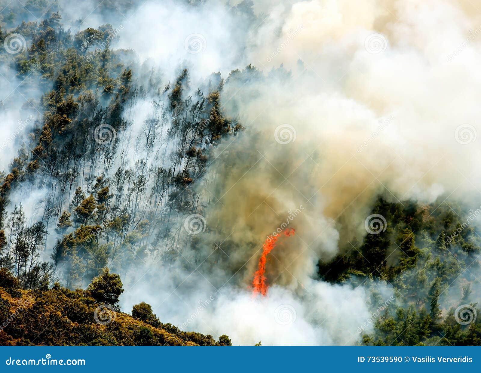 Podpala w lasowych terenach w Viotia w Środkowym Grecja
