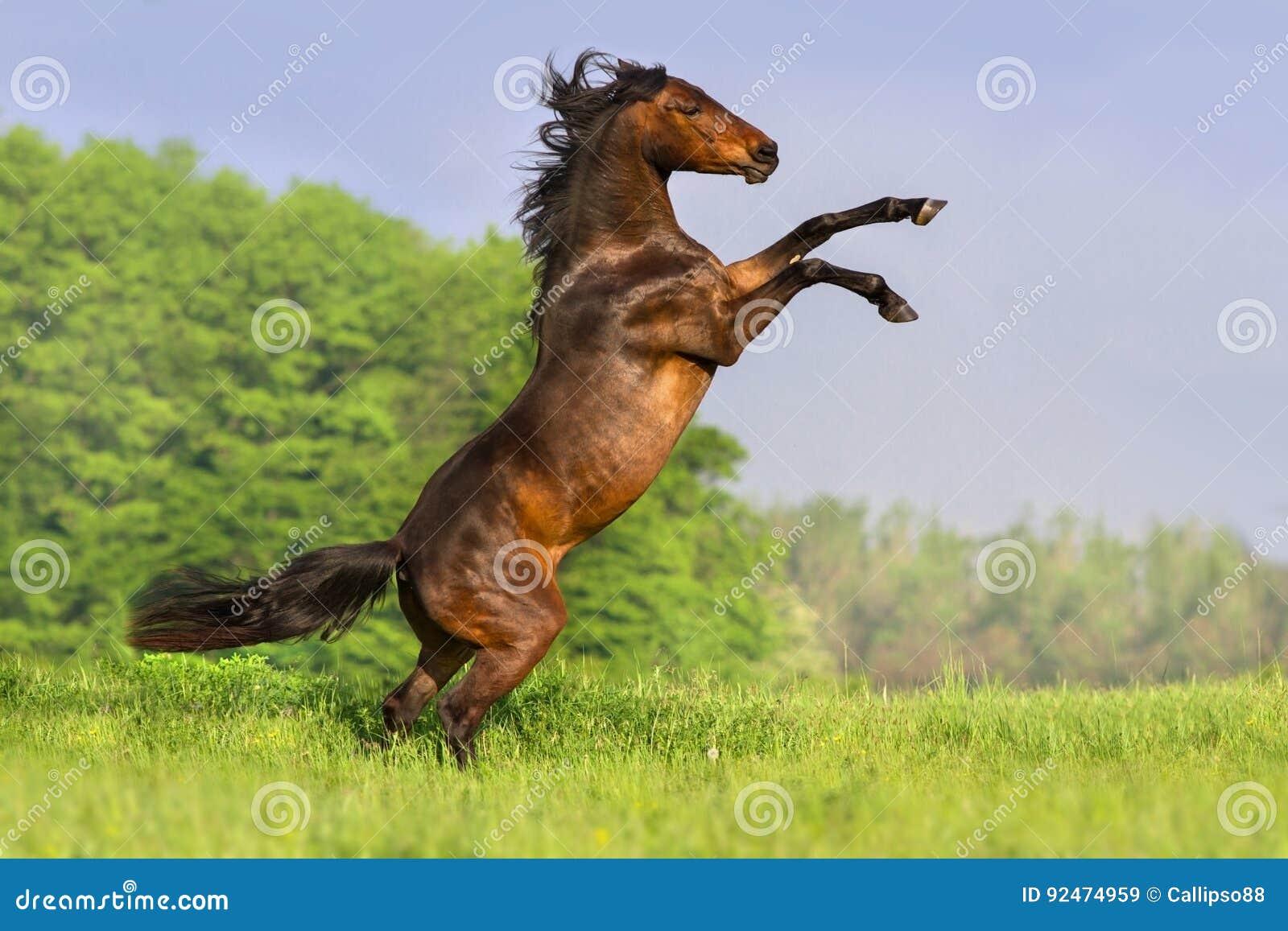 Podpalanego konia wychów up