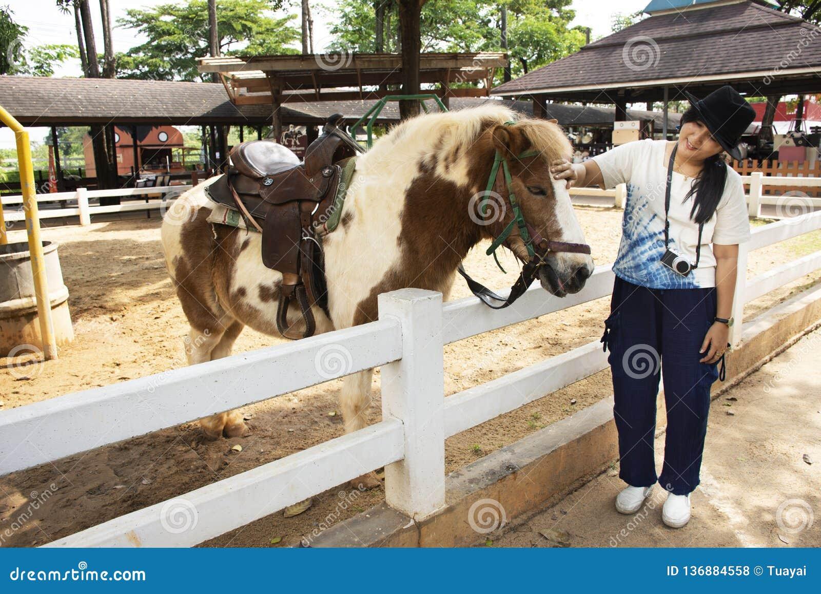 Podróżnik kobiety tajlandzka podróż i pozować dla bierzemy fotografię z Karłowatą końską pozycją relaksujemy w stajence przy zwie