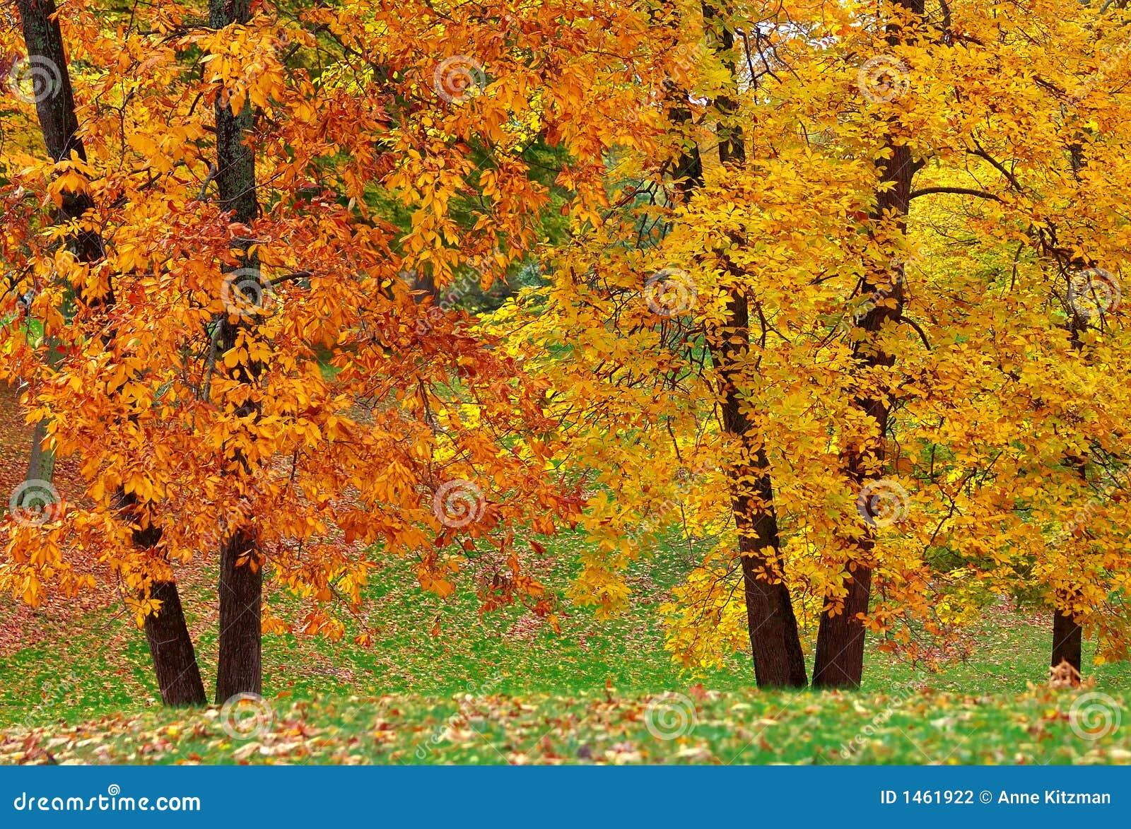 Podwójne drzewa