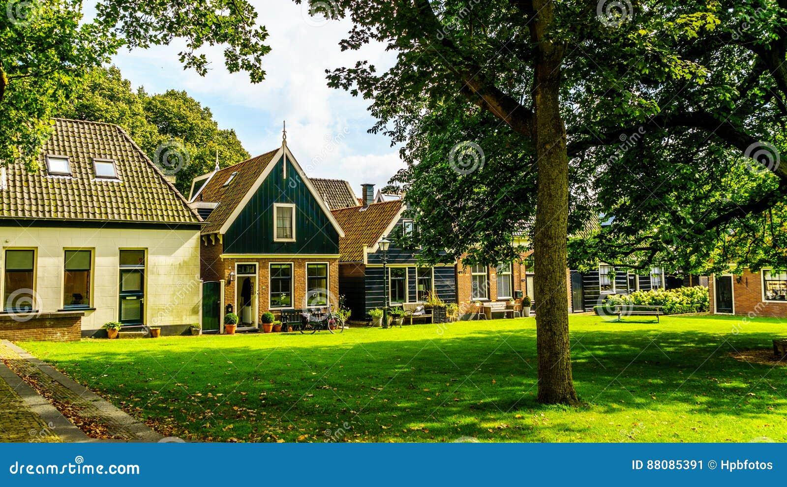 Podwórze z trawą i starymi drzewami w historycznej wiosce Midden Beemster Dębowymi i Cisawymi