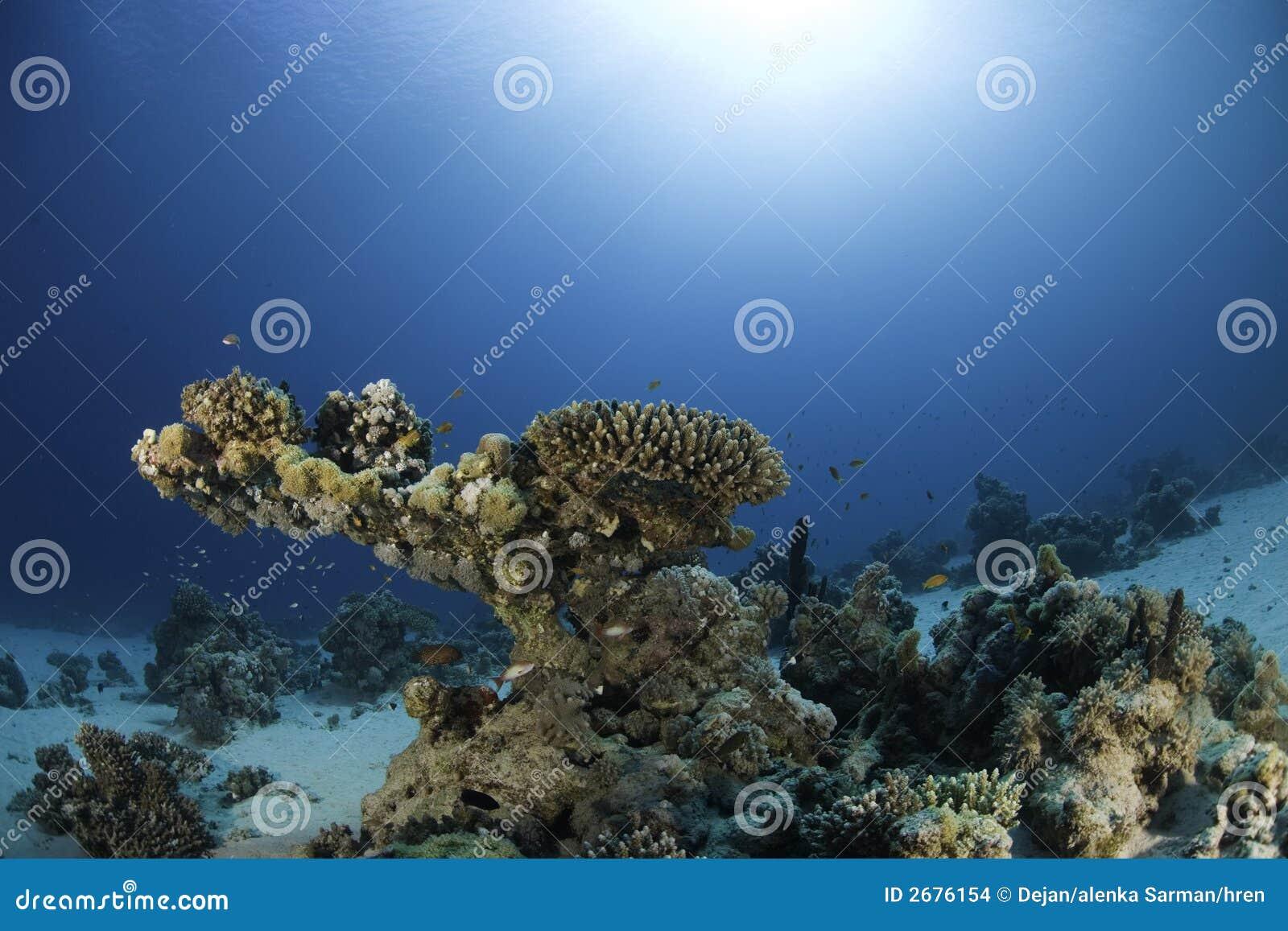 Podwodny rafowy
