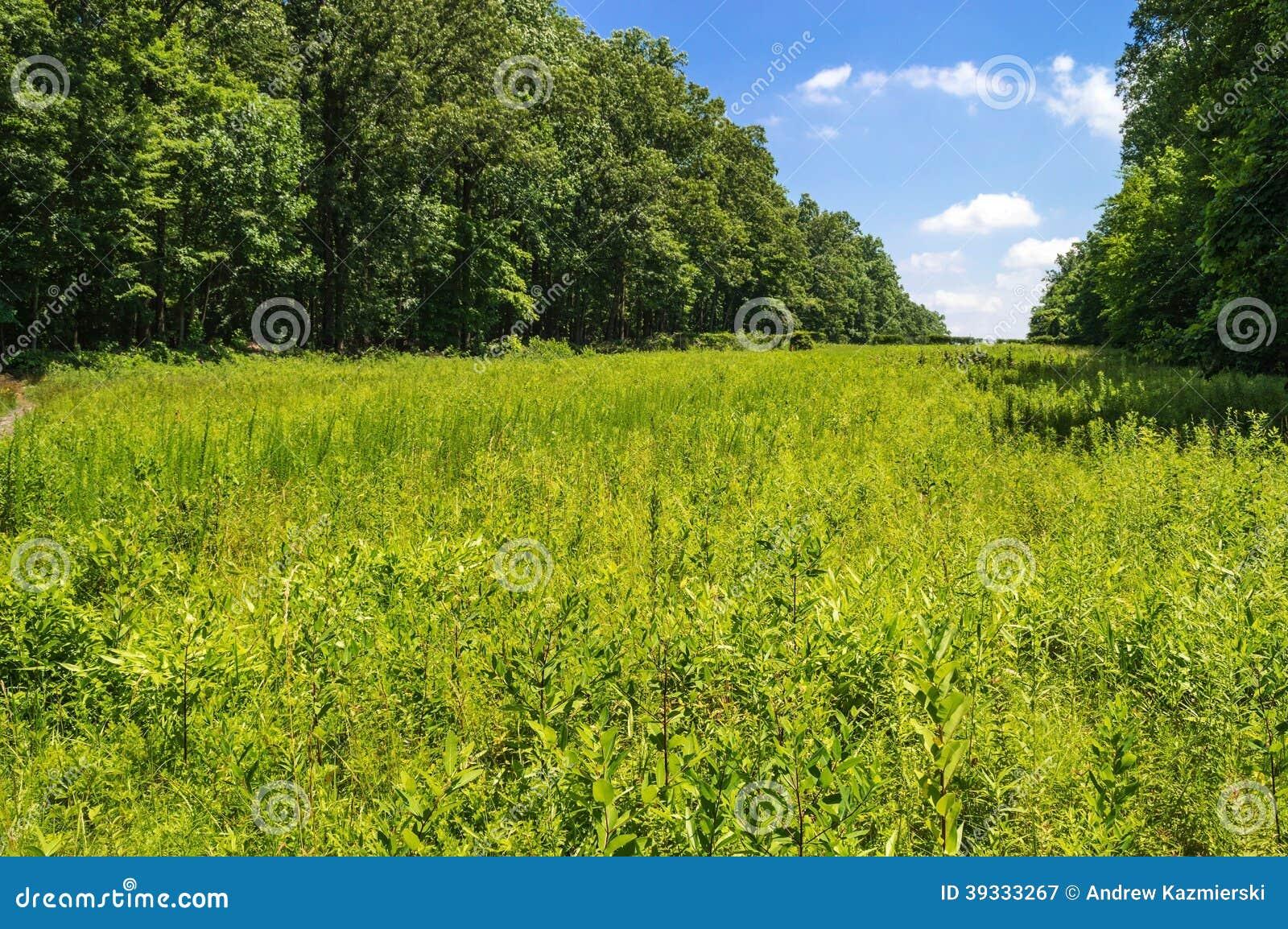 Pogodna łąka