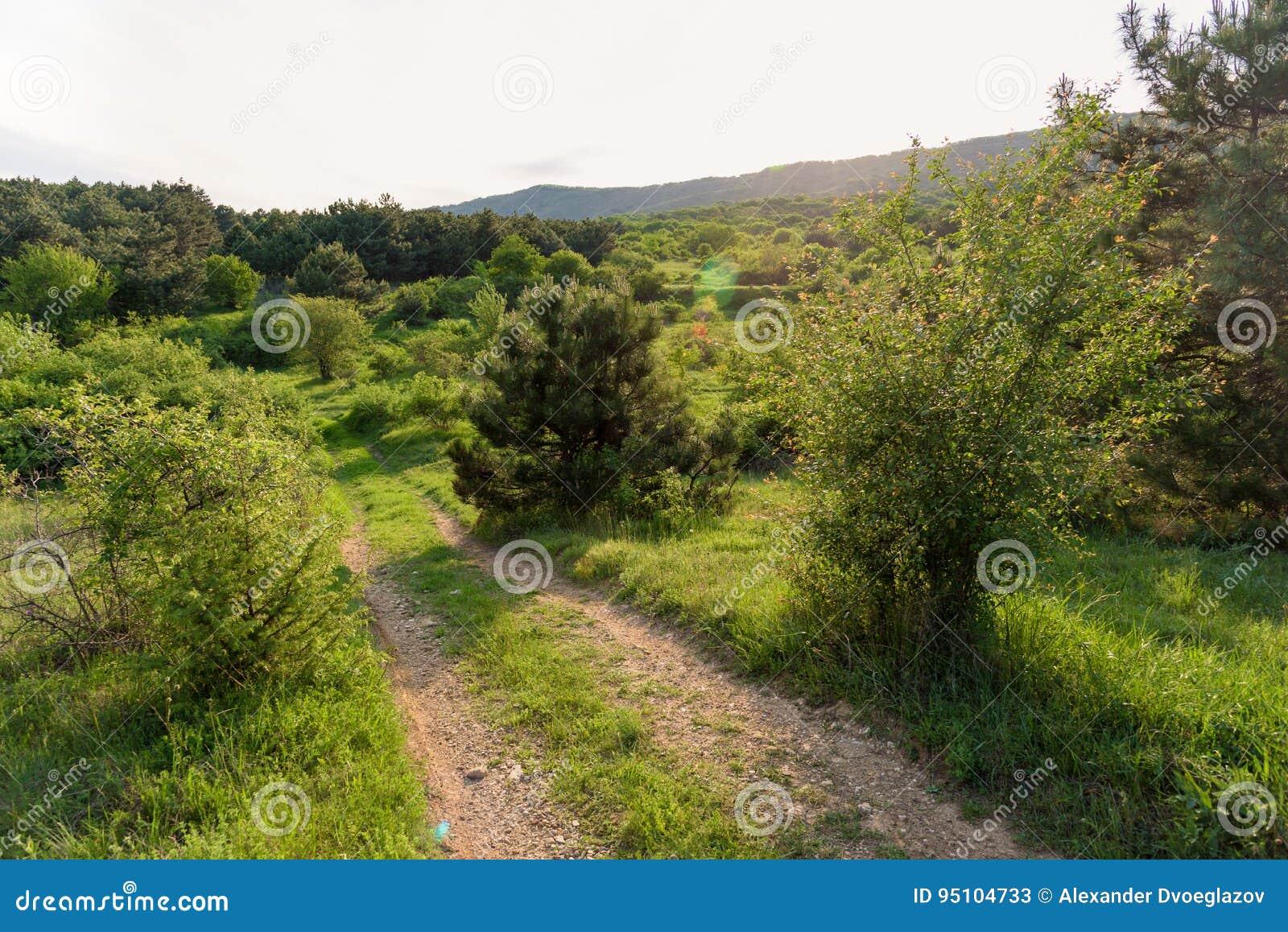 Pogodny drogowy zmierzchu krajobraz w polu