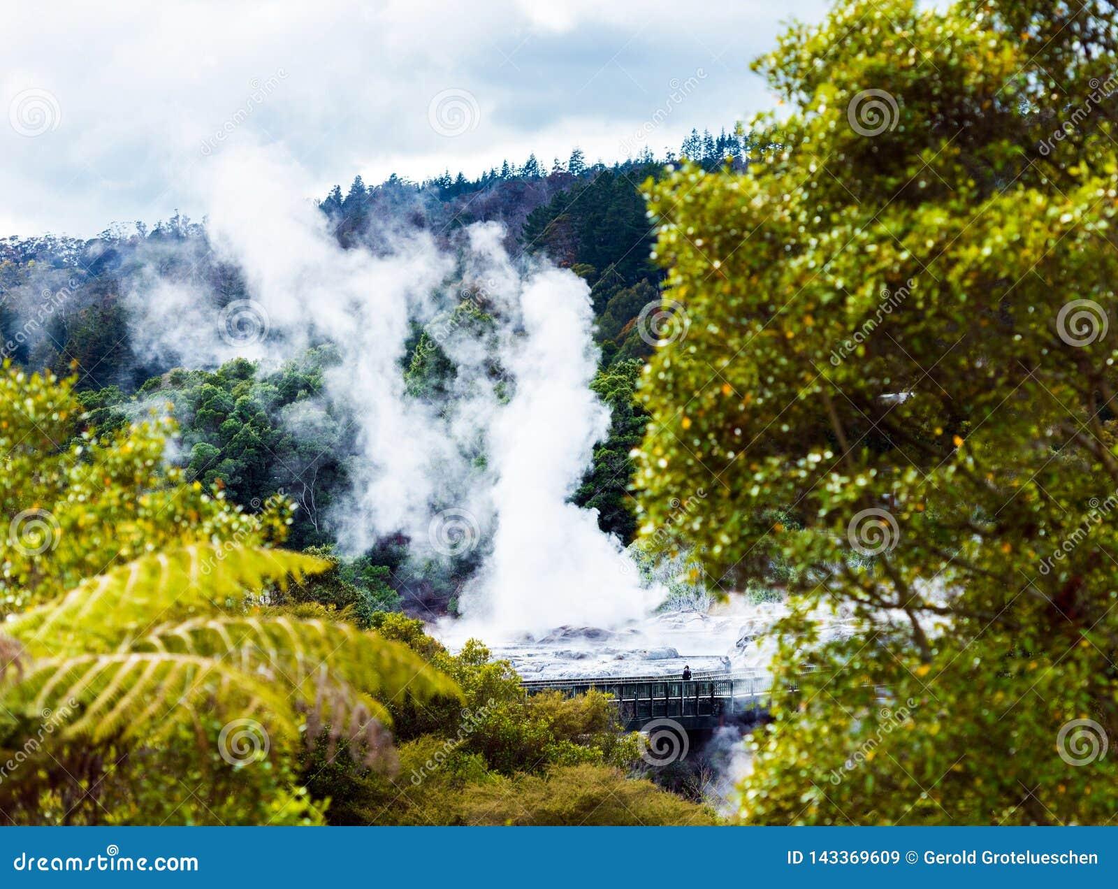 Pohutu Geyser, Te Puia, Rotorua, Nya Zeeland