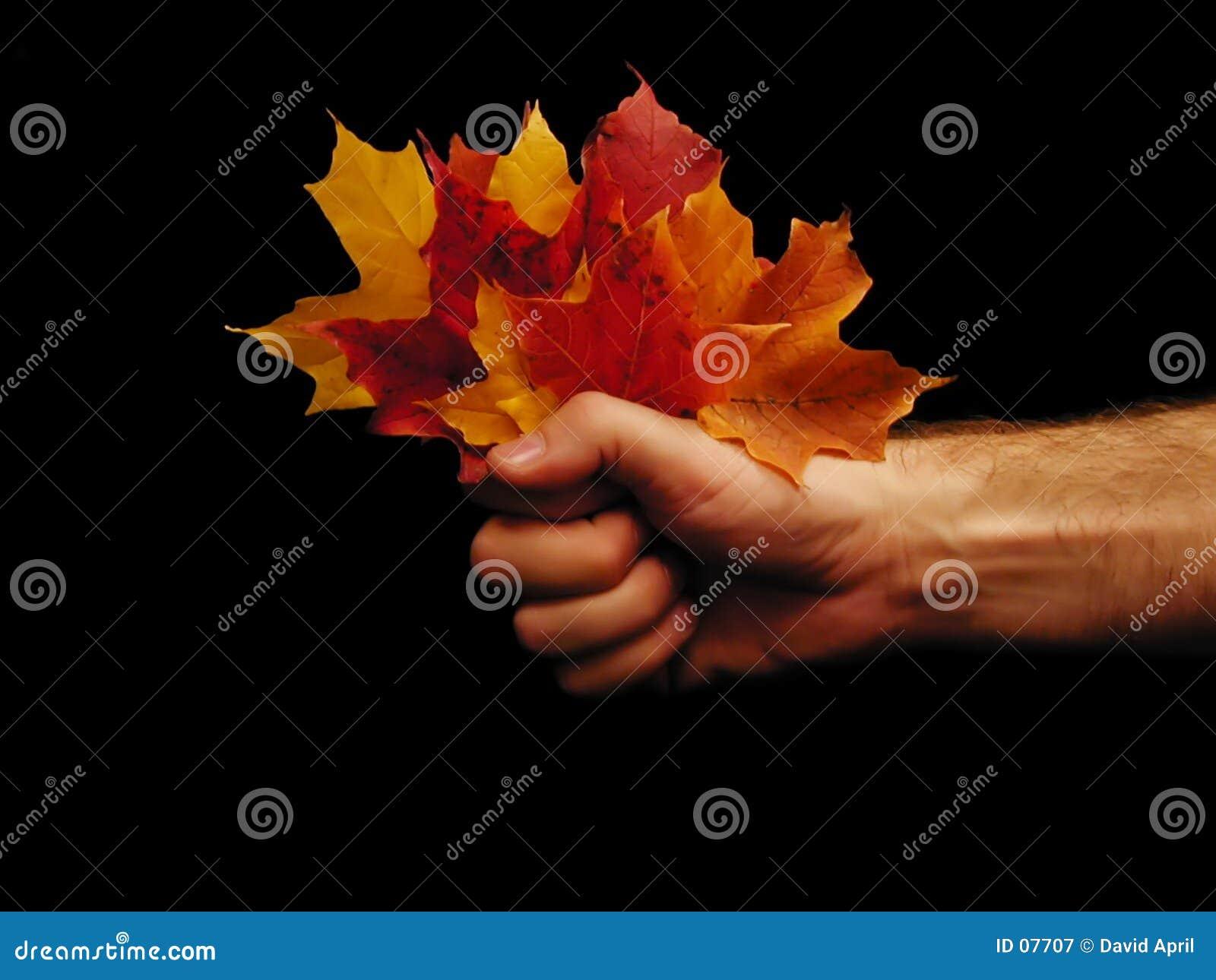 Poignée d automne