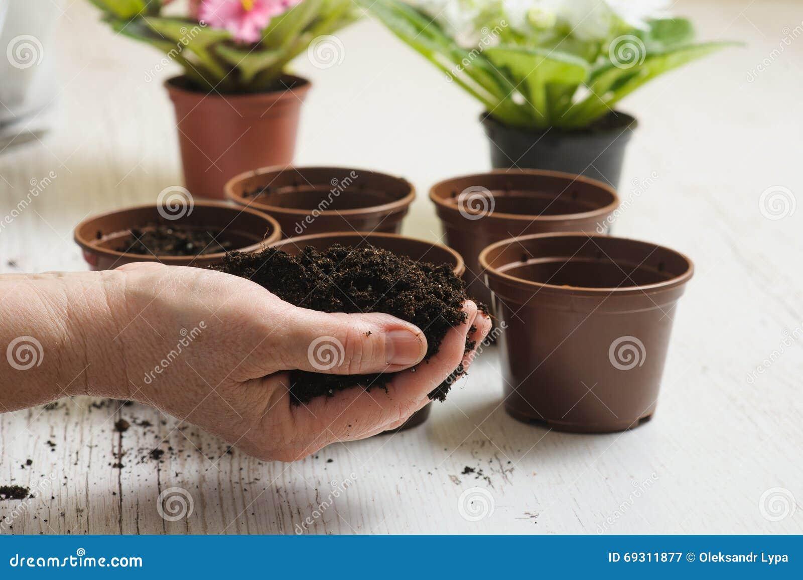 Poignée de sol dans une main femelle