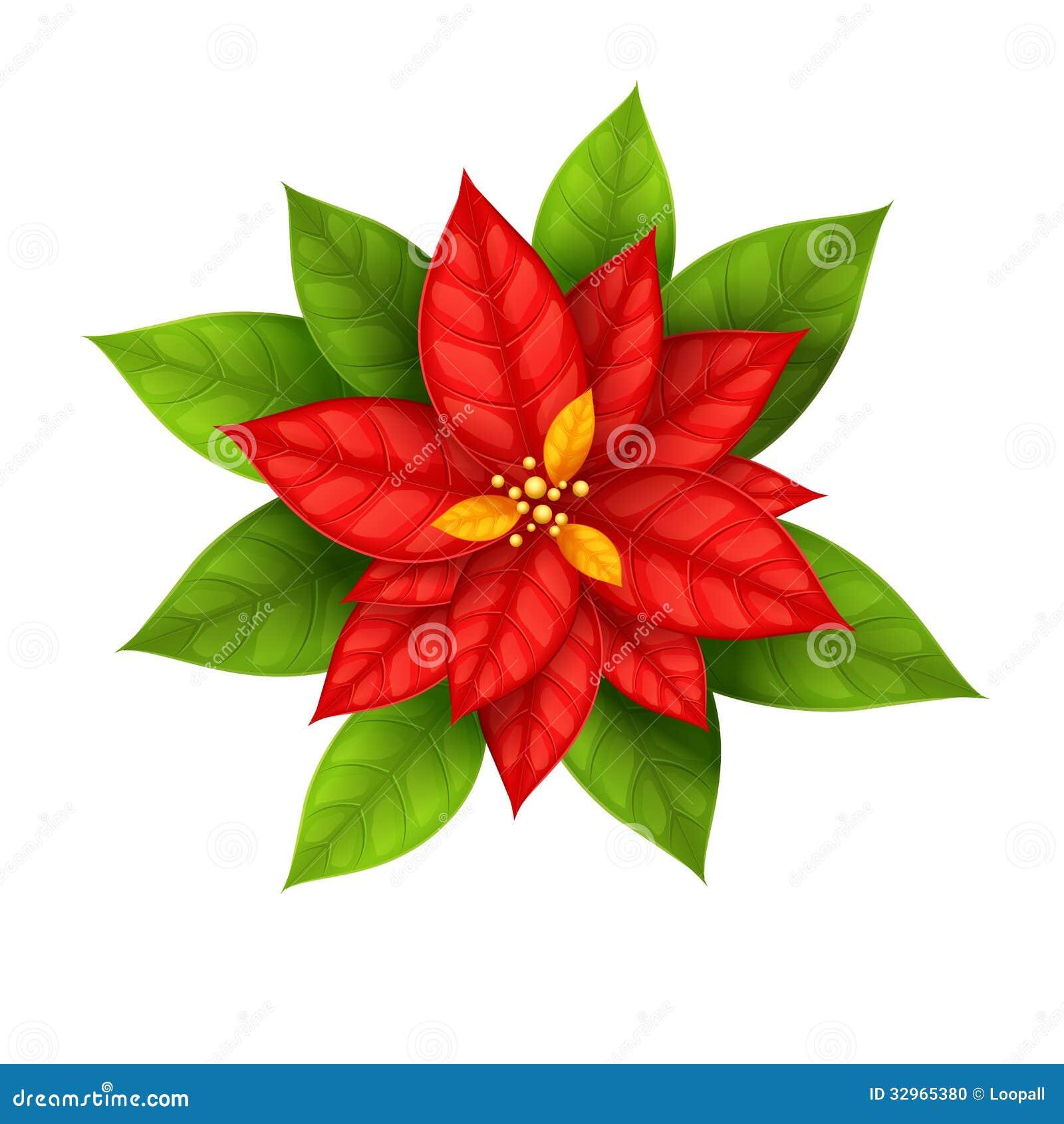 Poinsetia de la flor de la estrella de la navidad aislada - Imagenes flores de navidad ...