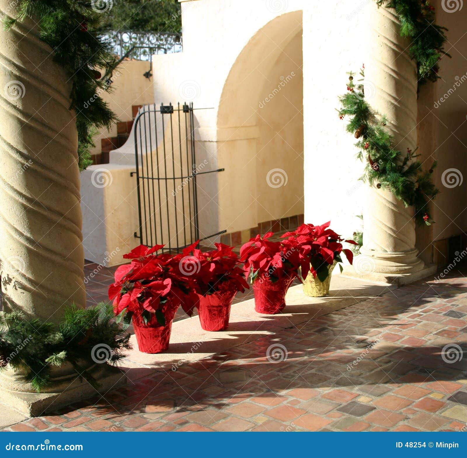 Poinsettia Χριστουγέννων