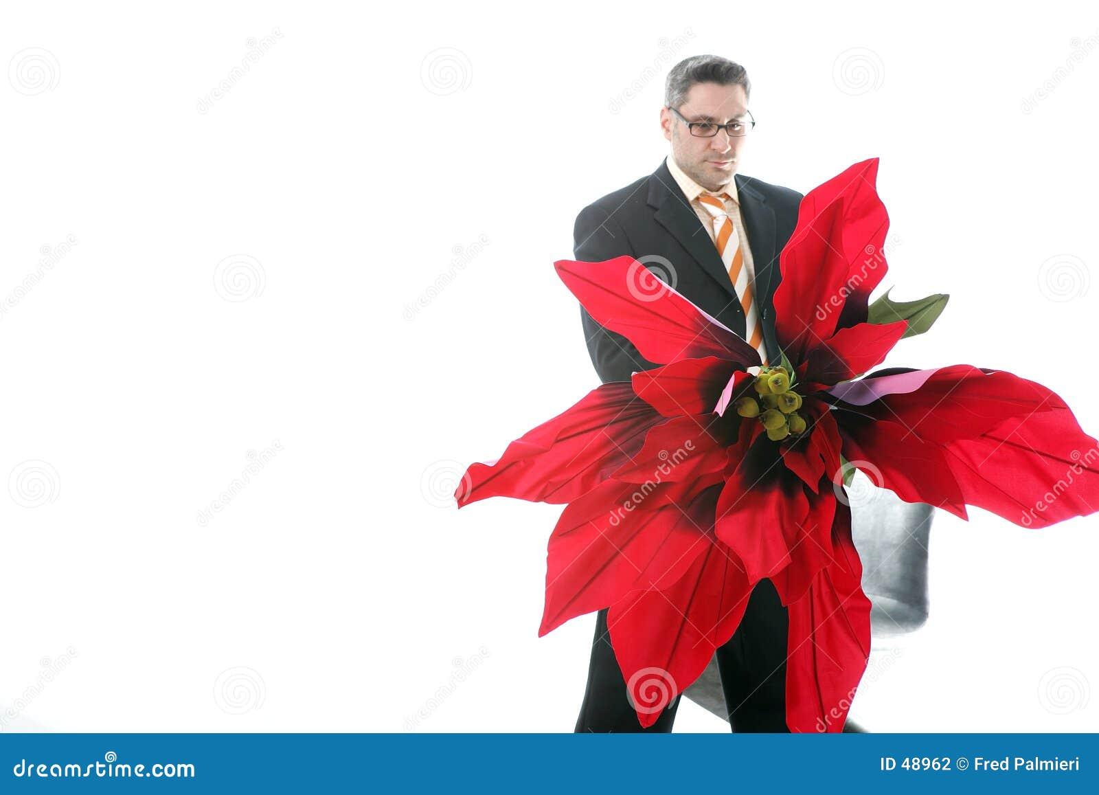 Poinsettia für Sie