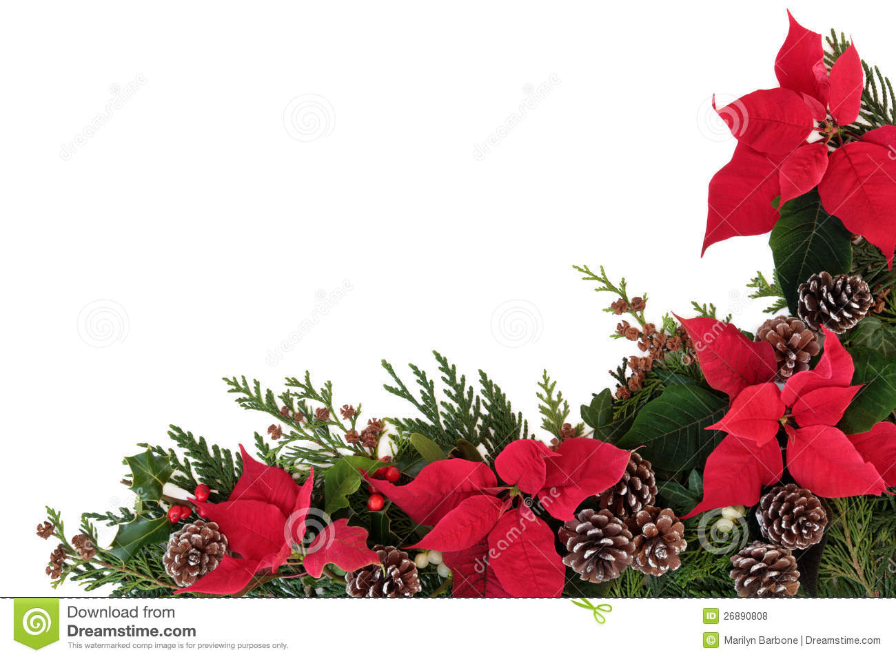 Christmas floral border stock photos freeimages com - Royalty Free Stock Photo Download Poinsettia Flower Border