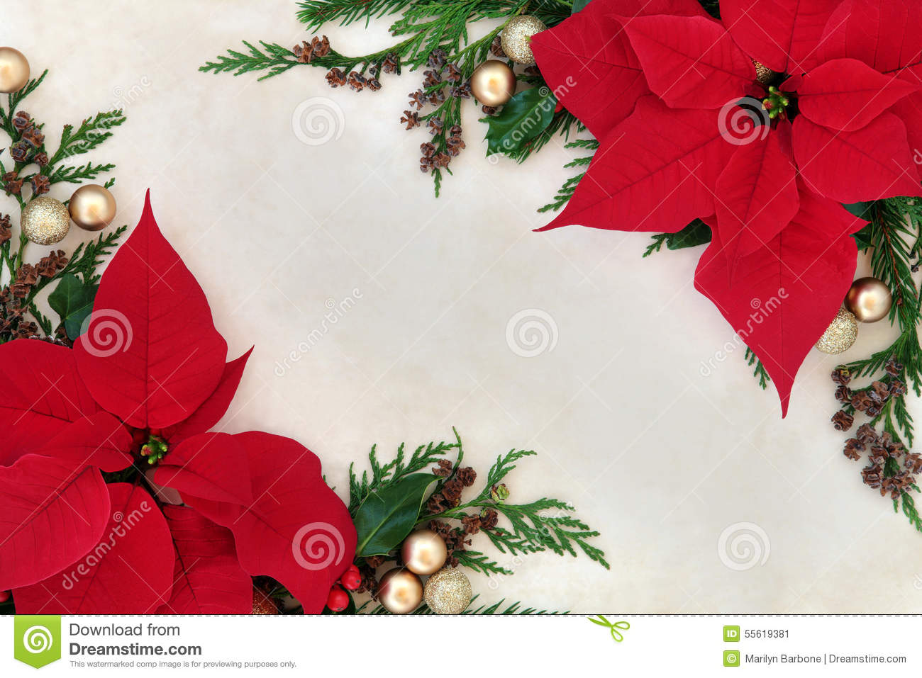 Isolated Red Poinsettia Flowers Corner Elements Isolated On White Vector Id S A also Poinsettia Border moreover Artistic Blue Christmas Tree X as well Poinsettia Flower Border Christmas Thanksgiving Background Parchment Paper together with Christmas Beautiful Garland Poinsettia Bell O Wooden Background Snow. on pointsettia border