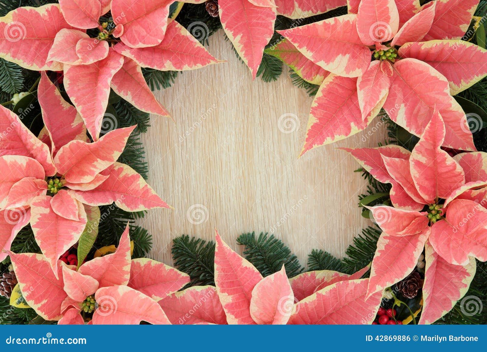 Poinsettia flower border stock photo image of space