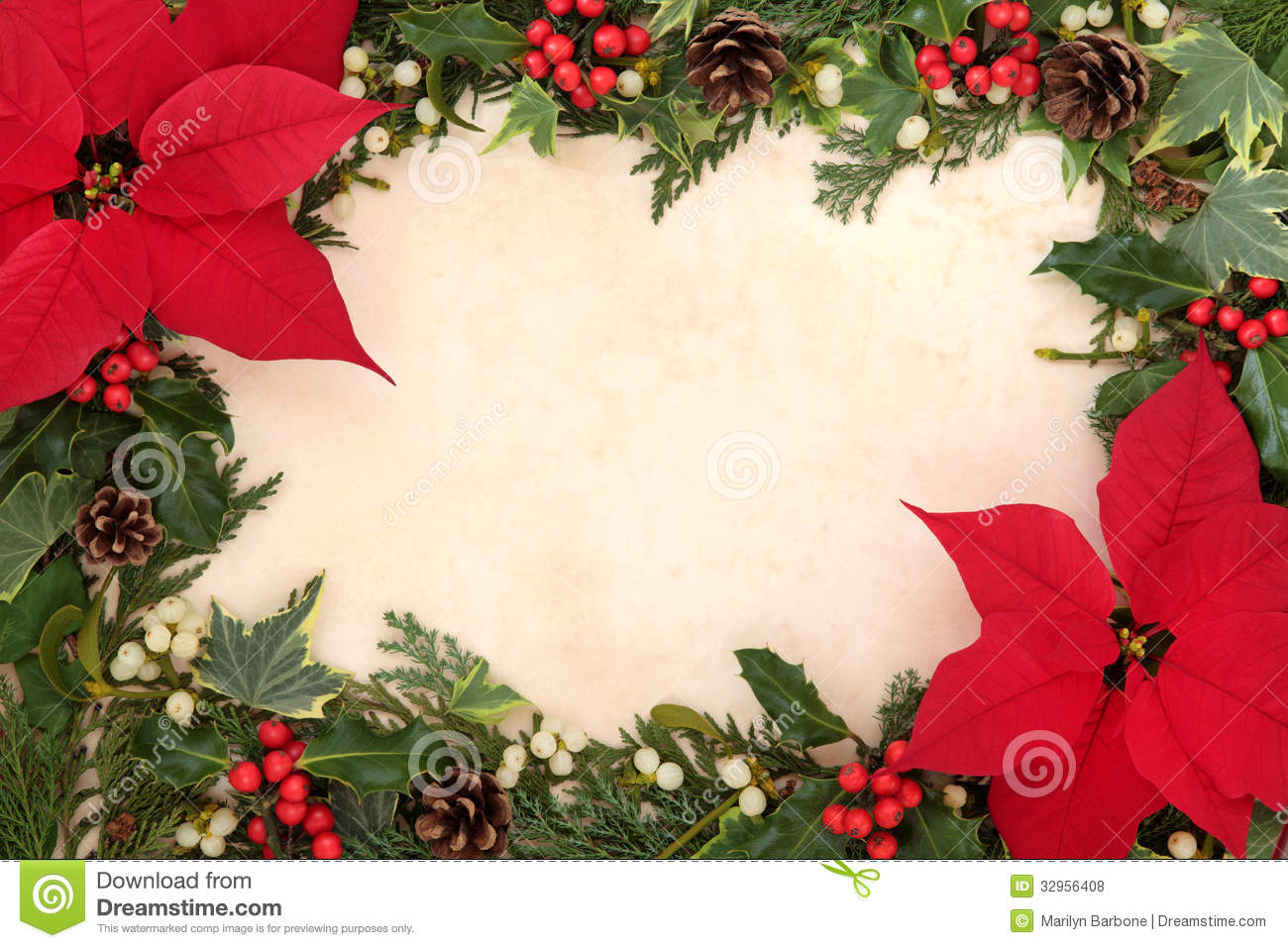 Thanksgiving and christmas border with poinsettia flower, holly, ivy ...