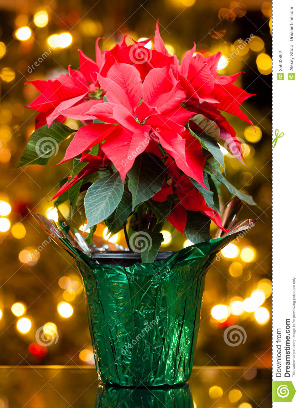 Poinsettia Stock Photography - Image: 35632862