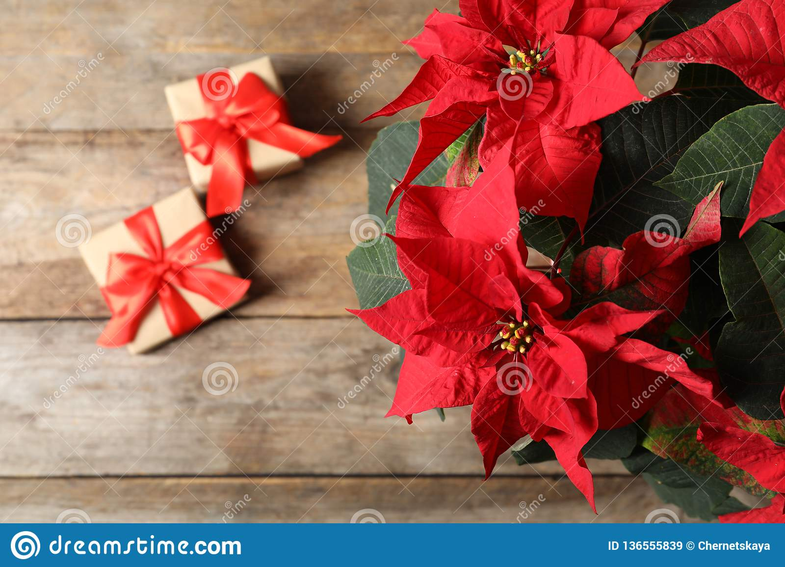 Poinsettia Traditional Christmas Flower With Gift Boxes On Wooden Table Stock Image Image Of Beautiful Copy 136555839