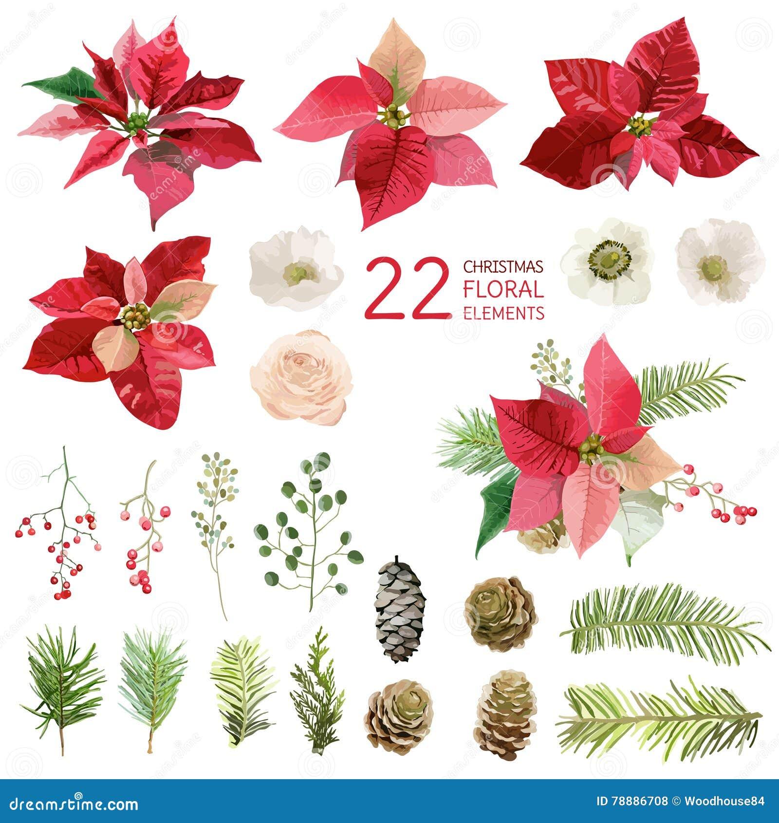 Poinsettiabloemen en Kerstmis Bloemenelementen - in Waterverf