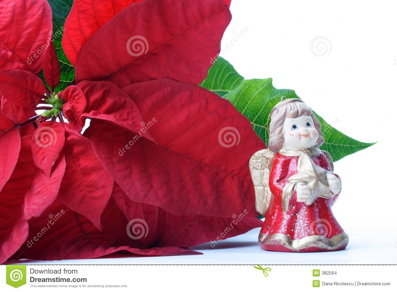 Poinsettias deco