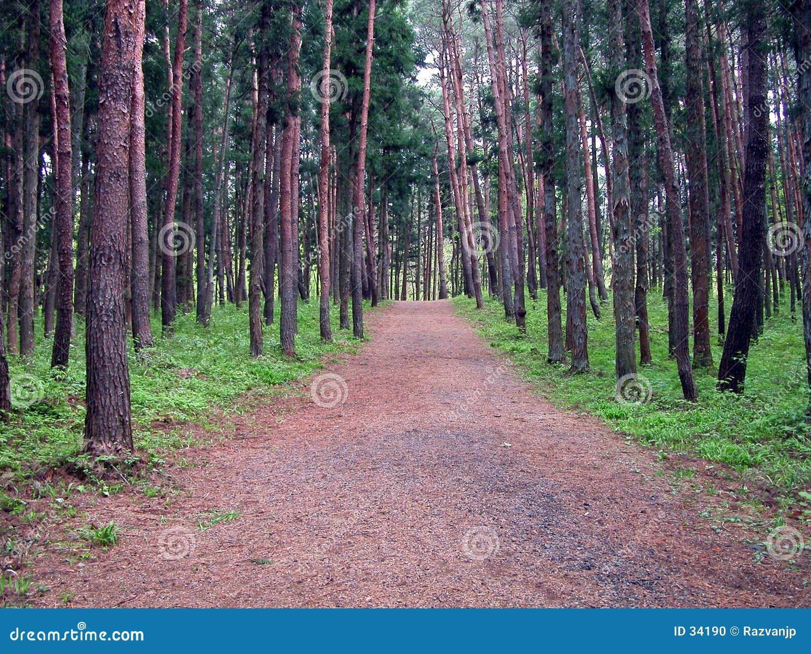 Point de vue dans la forêt