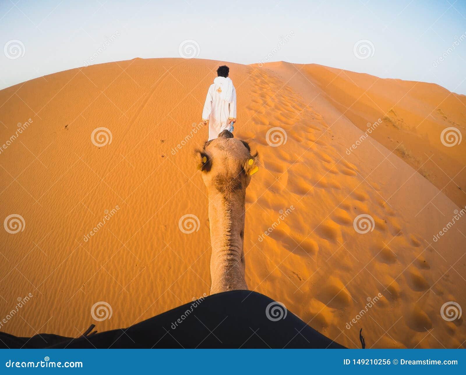 Point de vue sur le chameau en dessert