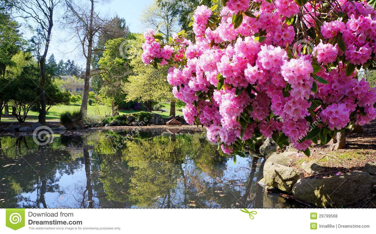 Point Defiance Park In Tacoma Wa Usa Pink Rhododendron