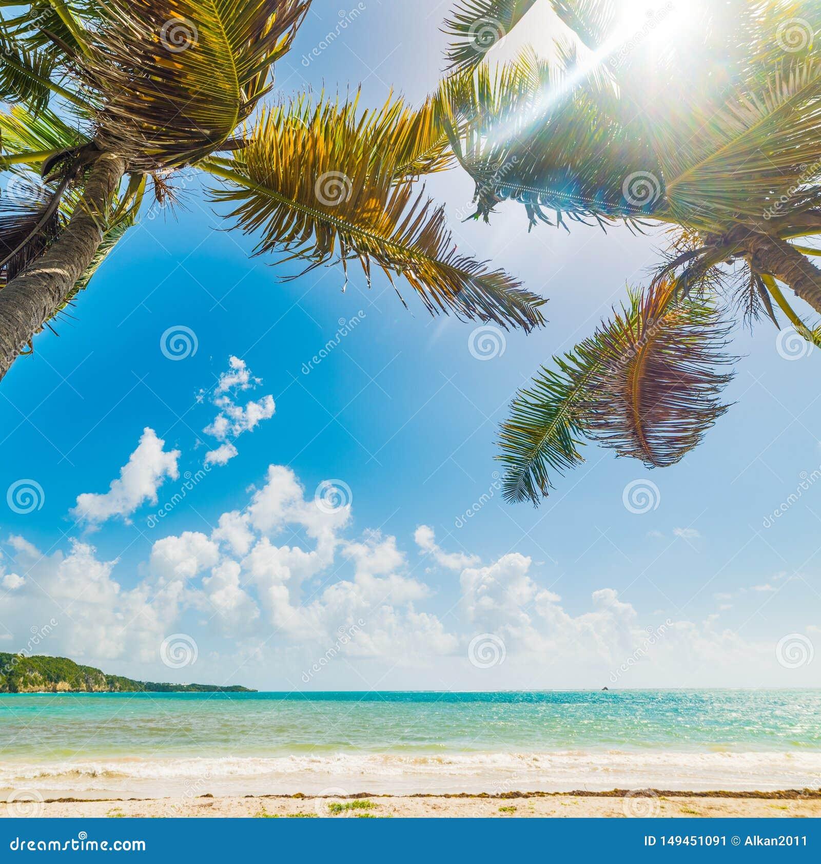 Guadeloupe Beach: Pointe De La Saline Beach In Guadeloupe Stock Image