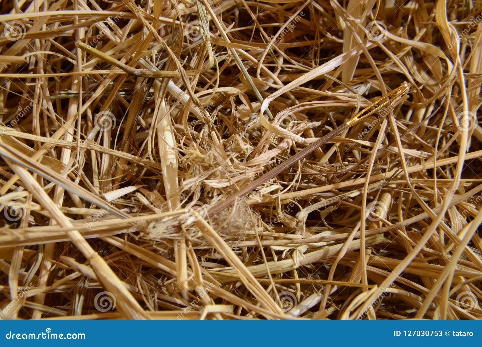 Pointeau dans un haystack