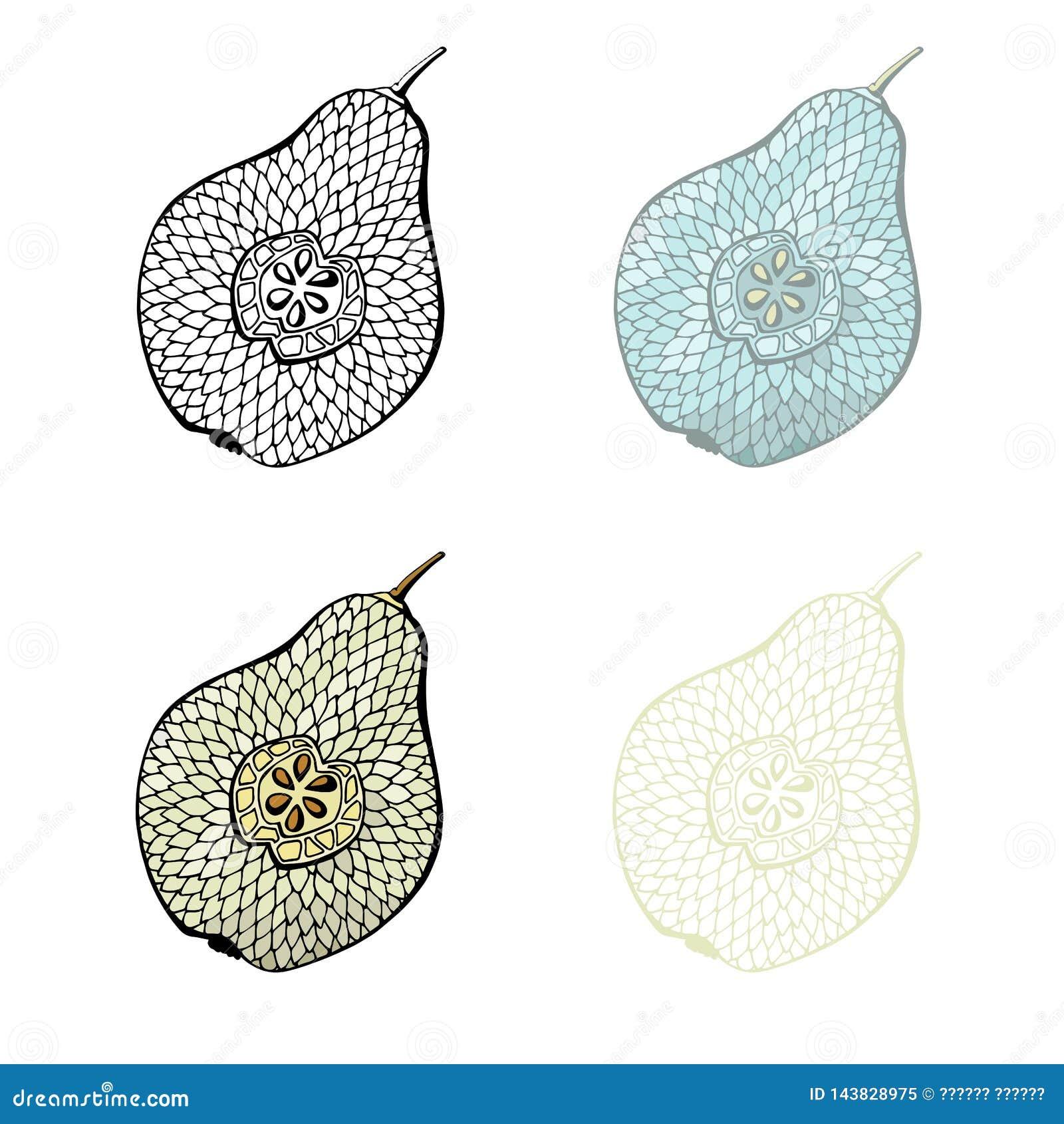 Poire coupée en tranches pour la coloration ou la décoration
