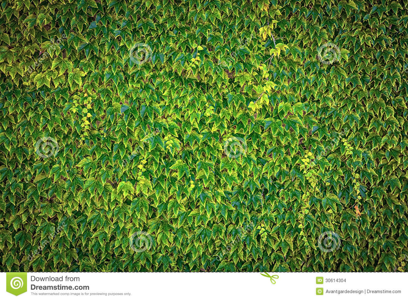 Image Result For Wall To Wall Carpet Prices