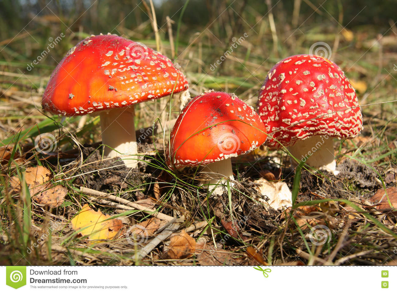 Poisonous mushrooms with name