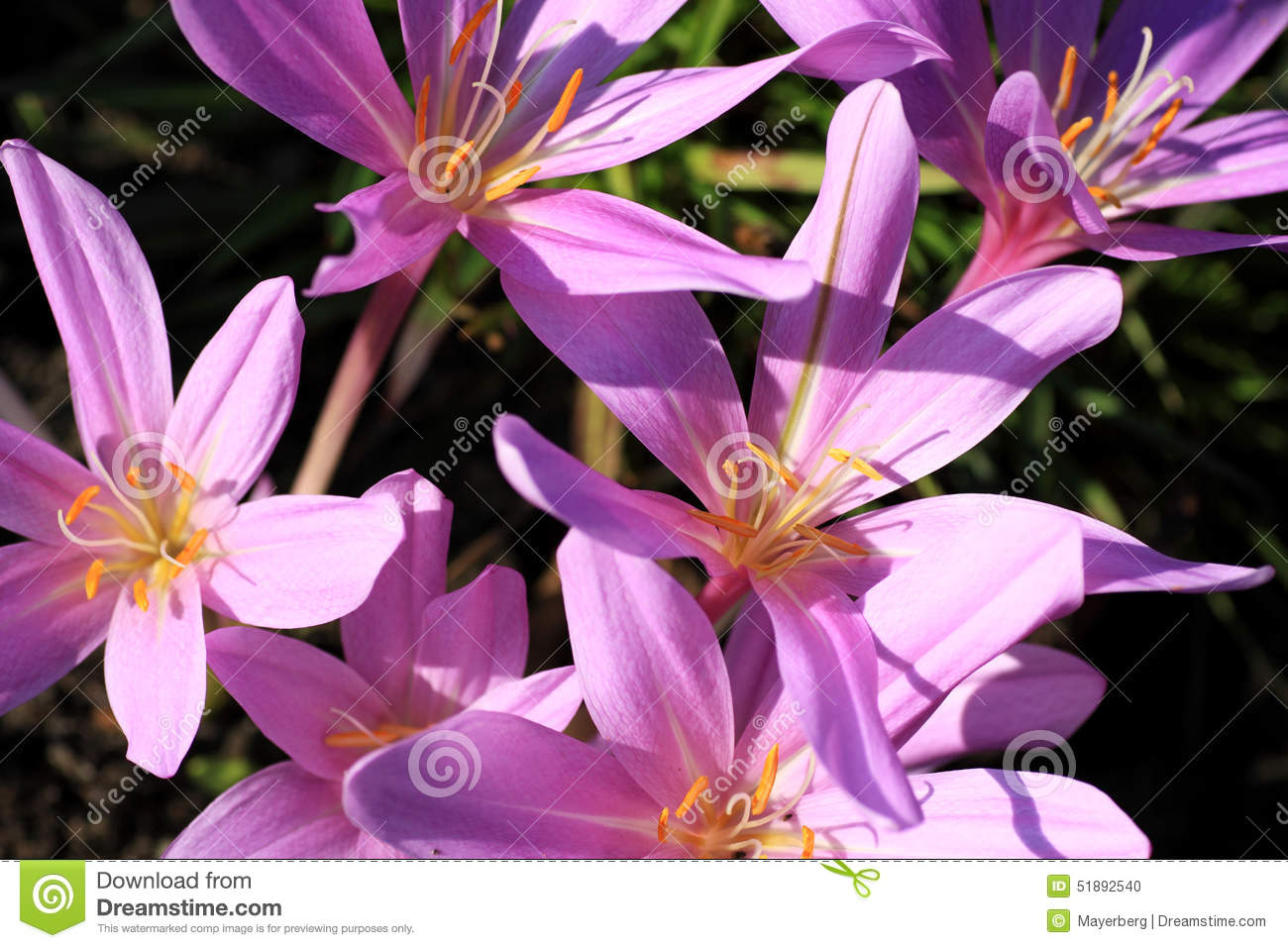 Poisonous plants and flowers stock photo image of forest head poisonous plants and flowers mightylinksfo