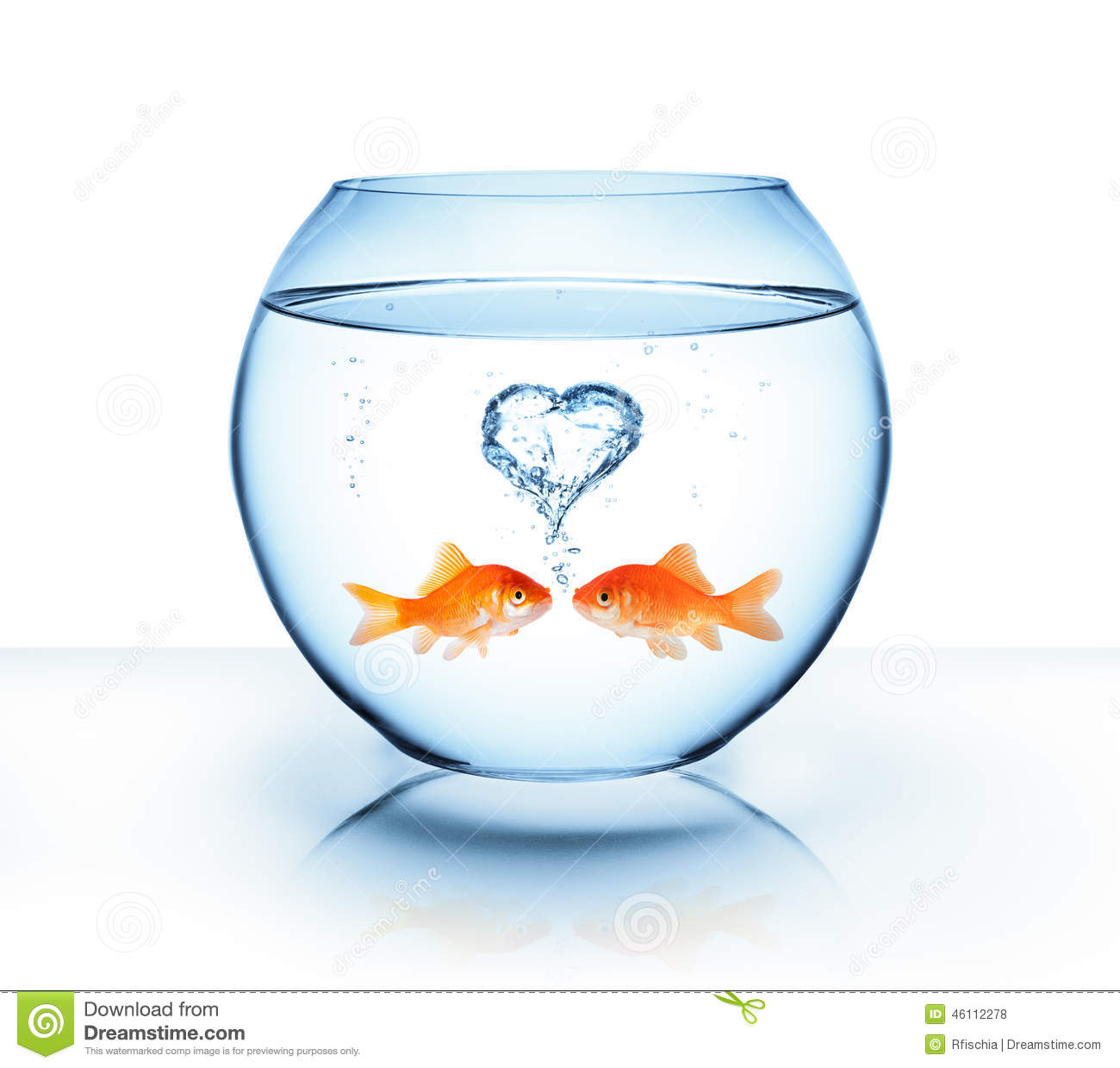 Poisson rouge dans l amour stock photos download 44 images for Prix poisson rouge jardiland