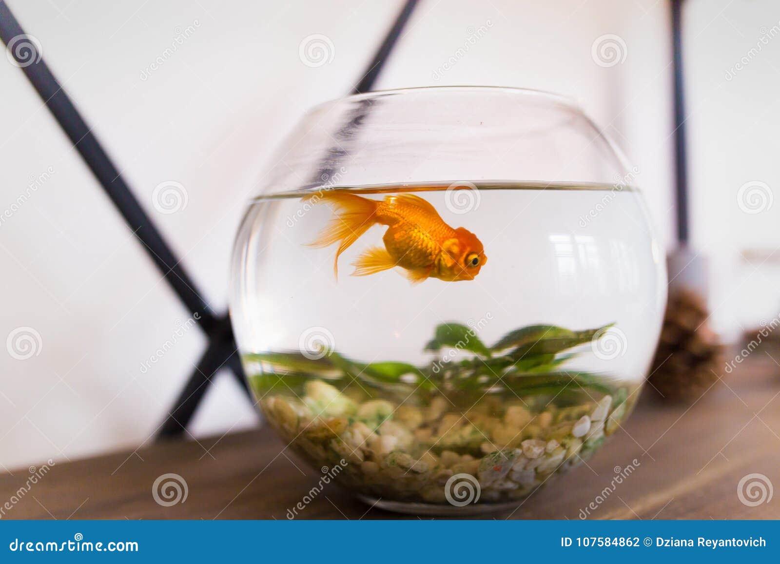 Petit aquarium rond for Aquarium poisson rouge boule
