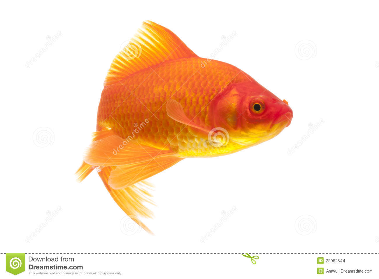 Poisson rouge rouge photo stock image du jaune isolement for Prix des poissons rouges