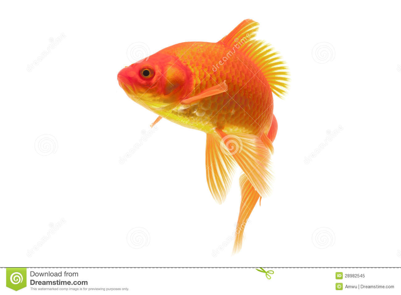 Poisson rouge rouge image stock image du jaune color for Prix des poissons rouges