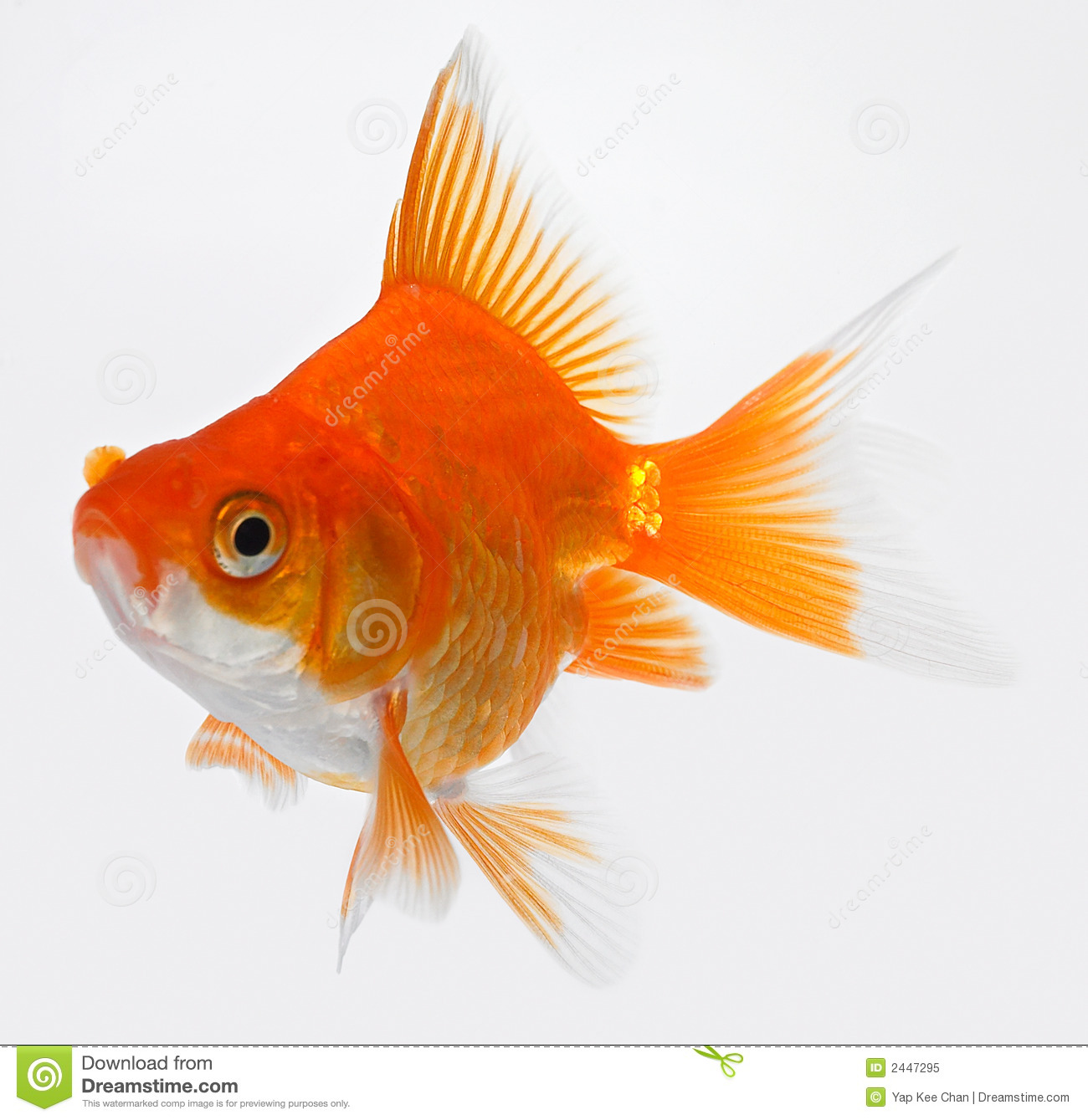 Poissons d or