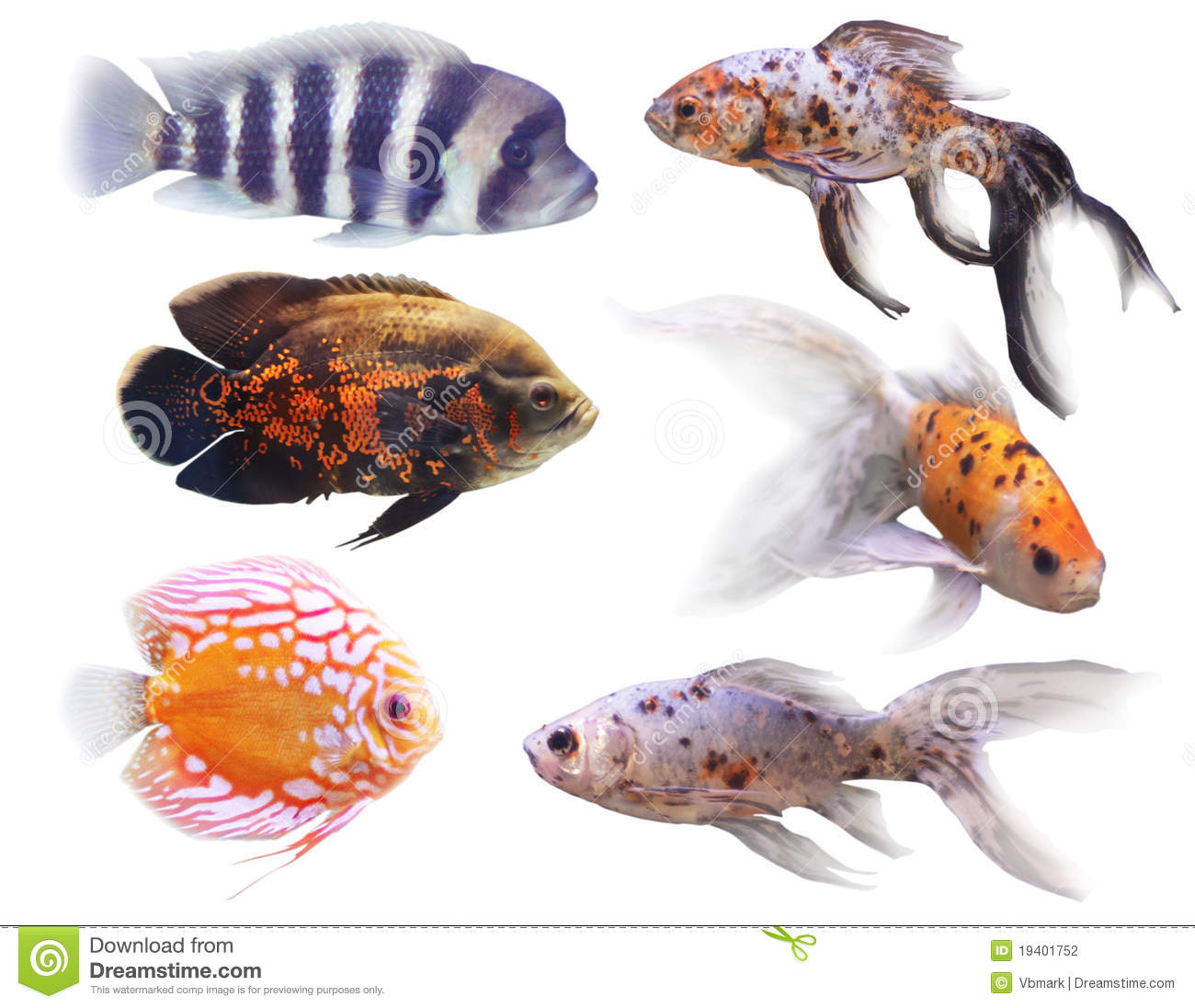 Poissons d 39 aquarium photo stock image du ailette rouge for Prix poisson aquarium
