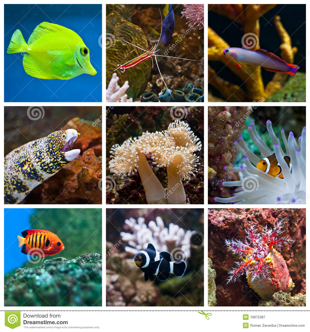 Poissons d 39 aquarium photographie stock libre de droits for Prix poisson aquarium