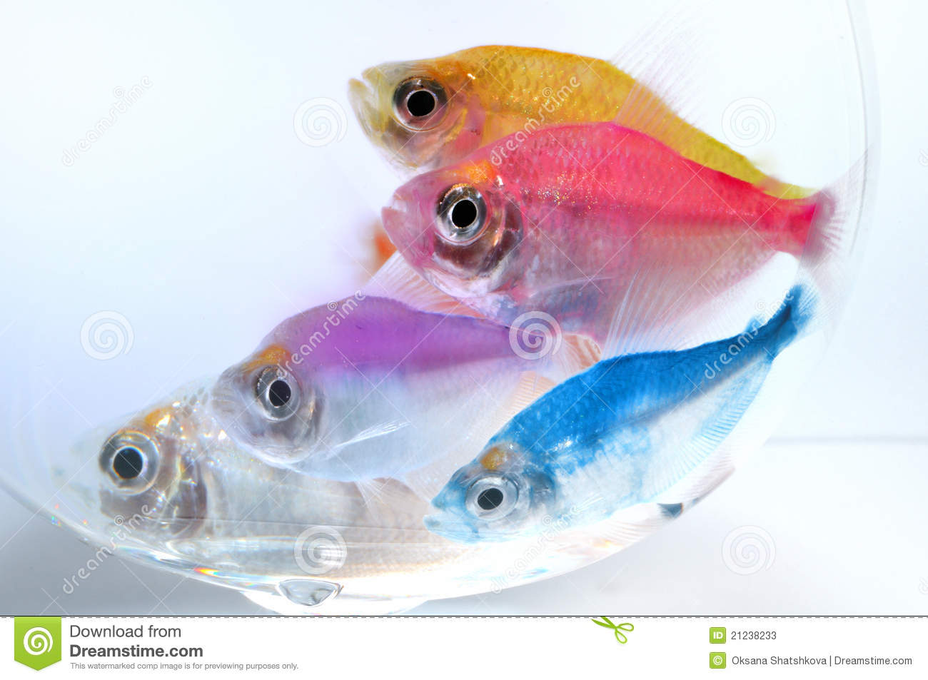 Poissons d 39 aquarium photos stock image 21238233 for Aquarium 1 poisson