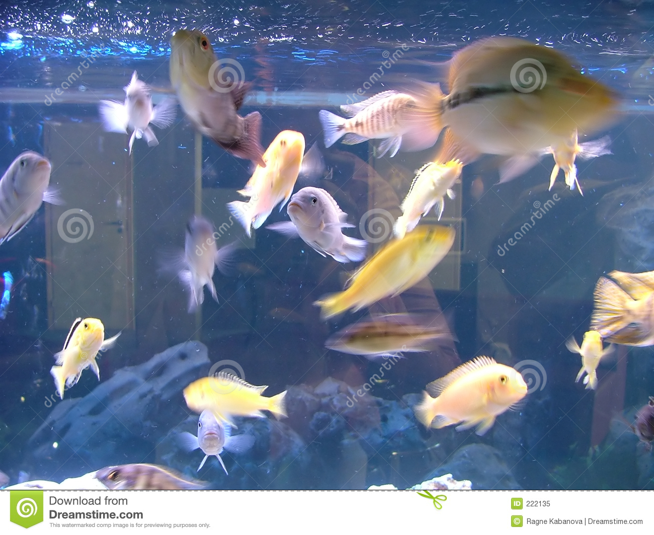 Poissons d 39 aquarium image stock image du aquatique for Prix poisson aquarium